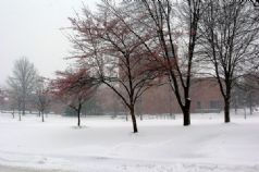 PAC snow.jpg