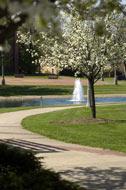 fountain spring 2005.jpg
