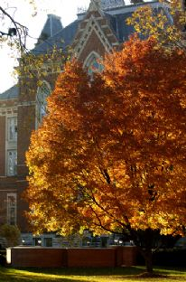 Fall Leaves East College 2007.jpg