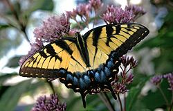 huo_butterfly.jpg