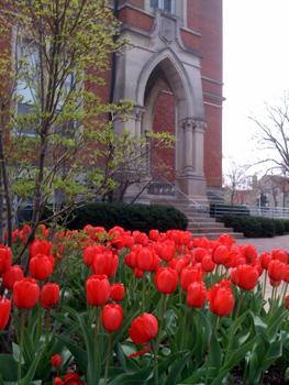 East College Tulips KOApr2011