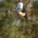 19_20101009_141815Sat_RF.JPG