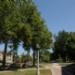 143445_20100822Sun_rf.JPG